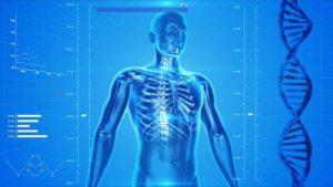 Squelette humain